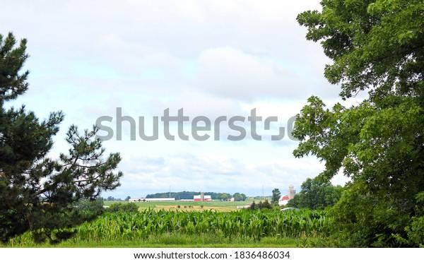 distant-farm-view-field-corn-600w-183648