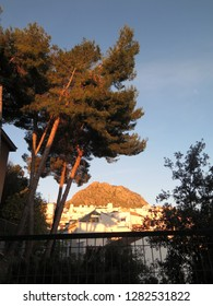 Distant mountain of El-Hacho viewd trough tall fir trees on sunny December morning in Andalusian village