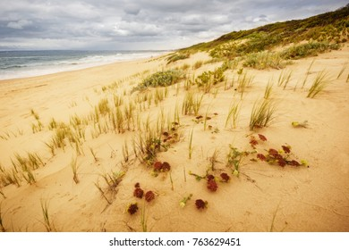 distant ocean view over a sunny sandy beach with whispy grass and foliage