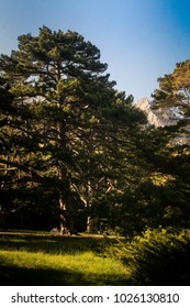 distant rocky mountain peak surrounded by green forest under sunlight from Vorontsov palace spring park in Crimea