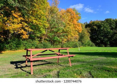 A distant tree line in the park with a picnic table in the foreground while the colors of autumn are bright.