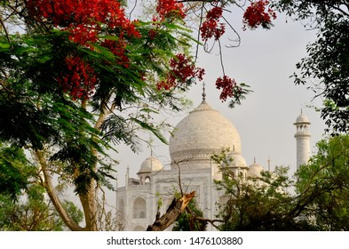 Distant view of the Taj Mahal at sunset from behind a tree