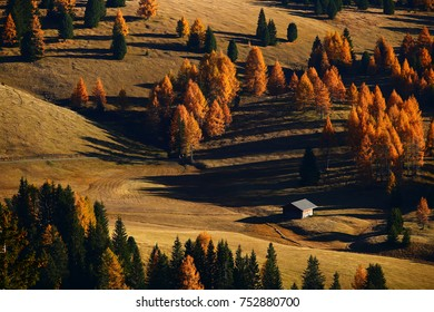 Distant view of a wooden rural farmer's shed in Seiser Alm meadow in the Dolomites, North Italy, Sudtirol (Trentino / Alto Adige). Warm evening sunlight is casting long deep shadows of the trees