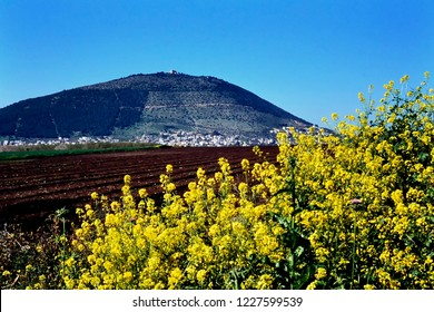 District of Galilee, Israel, blooming mustard and plowed field with Mount Tabor in the background believed to be the Mount of Transfiguration, March 6, 1998