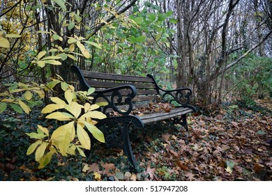 A disused bench seats fallen leaves in Poundstock Woods, Cornwall
