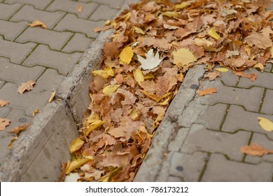 Ditch clogged with leaves
