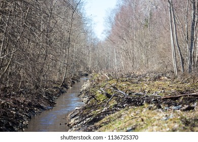 Ditch in the forest spring