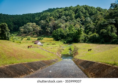 Ditch in green pastures / Thailand national park