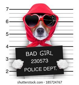 diva lady dog posing for a lovely mugshot