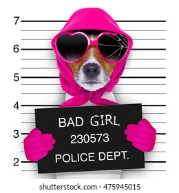 diva lady girl  dog posing for a lovely mugshot, as a criminal and thief with broken sunglasses and scarf