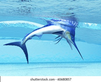 DIVE - A Marlin dives in shallow waves looking for fish to eat.