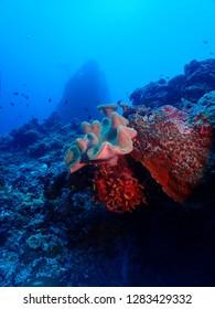 Dive in Rabaul , Pigeon island , East New Britain province . Papau New guinea best scuba diving . Atun Wreck dive .