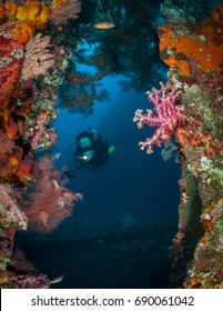 Diver amongst the coral growth on the wreck of the Liberty, Tulamben, Bali