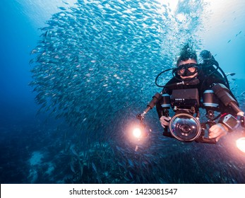 Diver and bait ball in coral reef of Caribbean Sea around Curacao at dive site Playa Piskado
