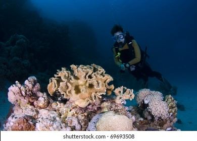 Diver behind coral on a reef in the Red Sea, Egypt