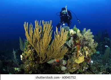 Diver at the Belize barrier reef