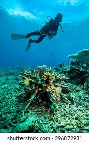 diver blue water scuba diving bunaken indonesia sea reef ocean