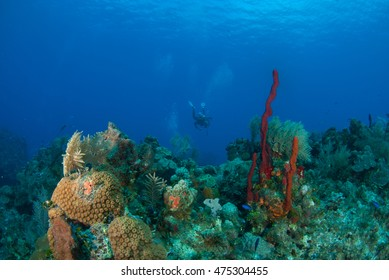 Diver with Cayman's Beautiful Corals, Grand Cayman