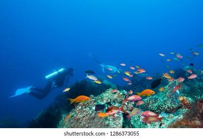 Diver, coral reef and  manta ray.