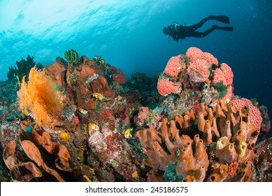 Diver, coral reef, sponge, sea fan in Ambon, Maluku, Indonesia underwater photo. The coral reefs are very colorful.