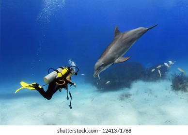 Diver and dolphin staring at each other