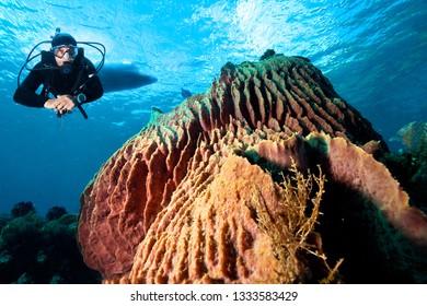 A diver explores tropical coral reef.