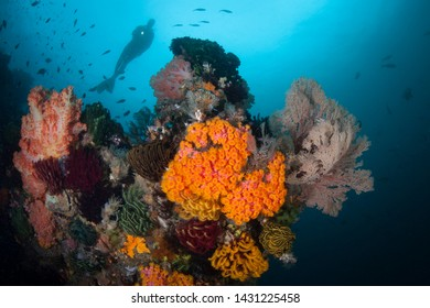 A diver explores a vibrant coral reef in Komodo National Park, Indonesia. This region harbors extraordinary marine biodiversity and is a popular destination for divers and snorkelers.