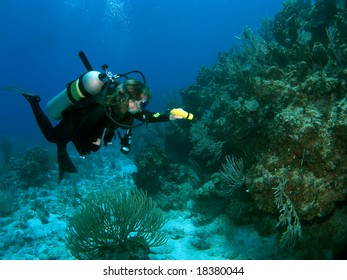 Diver exploring Reef with a Flashlight in the Caribbean
