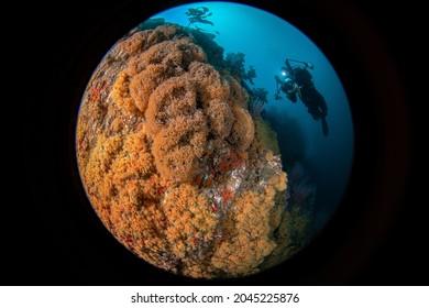 Diver at Farnsworth Bank, Santa Catalina Island