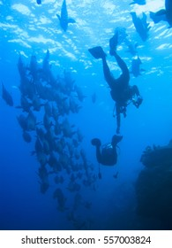 diver with fish.