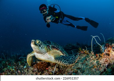 Diver and green Turtle in Gili, Lombok, Nusa Tenggara Barat, Indonesia underwater photo. Green turtle Chelonia mydas resting on the reefs
