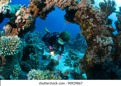 Diver and hard corals.