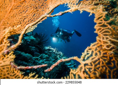 Diver in the hole of sea fan in Derawan, Kalimantan, Indonesia underwater photo. Diver taking picture the reefs.
