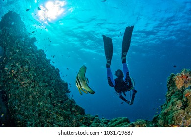 Diver meets a bat fish underwater in Malives
