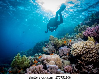 Diver over the coral reef. Anthias fishes surrounding hard and soft corals of the Red Sea . Taken at Fury Shoal reefs, Southern Egypt.