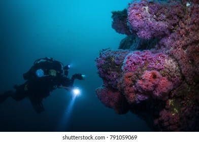 A diver photographing the marine life