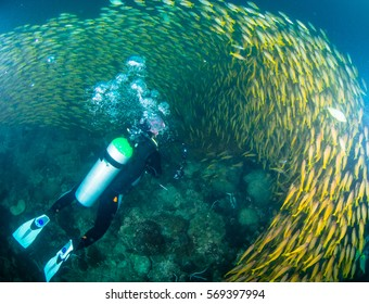 Diver with schooling of fish