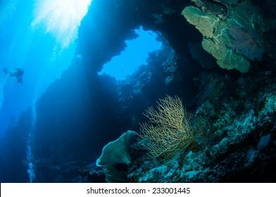 Diver, sea fan Melithaea in Banda, Indonesia underwater photo. There are sponge and sea fan Muricella.