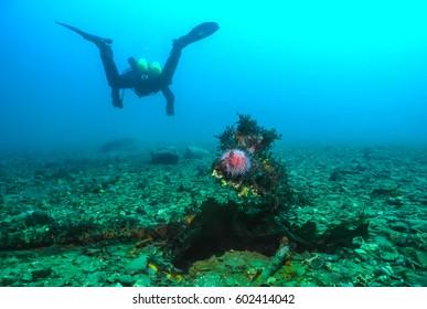 Diver and sea urchin