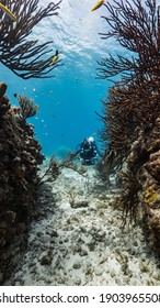 Diver in shallow water of coral reef in Caribbean Sea, Curacao with fish, coral and sponge