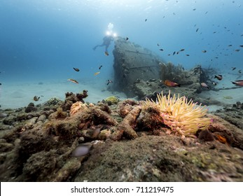 Diver at a ship wreck in the Caribbean Sea around Curacao with colorful Sea Anemone in foreground