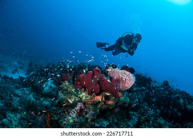 Diver, sponges and various coral fishes in Gili, Lombok, Nusa Tenggara Barat, Indonesia underwater photo. There's a barrel sponge, anthias, soldierfish.