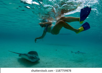 diver and sting ray in moorea french polynesia