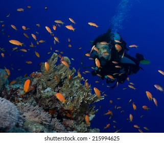 Diver surrounded by clouds of Jewel Fairy Basslets, Soraya Reef, Red Sea, Egypt