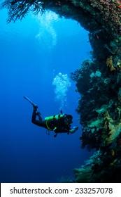 Diver swimming around in Banda, Indonesia underwater photo. There are sponge, black sun coral Tubastraea micranthus.