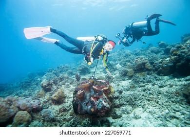 diver swimming around giant clam