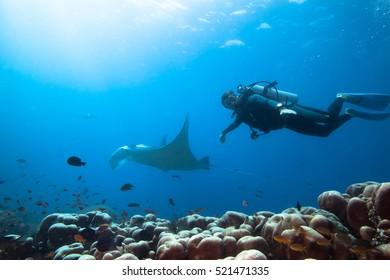 Diver swimming with manta ray