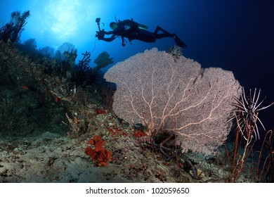 Diver swims above sea fans of Kuda Rah Thila - South Ari Atoll, Maldives