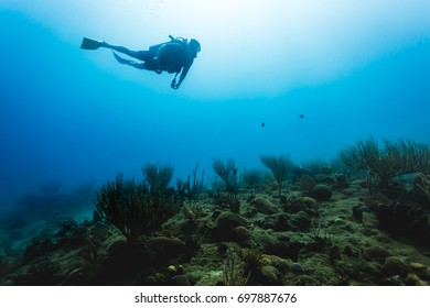 Diver swims over coral reef