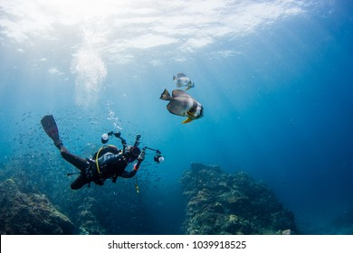 Diver taking picture Batfish with rays light ocean background.